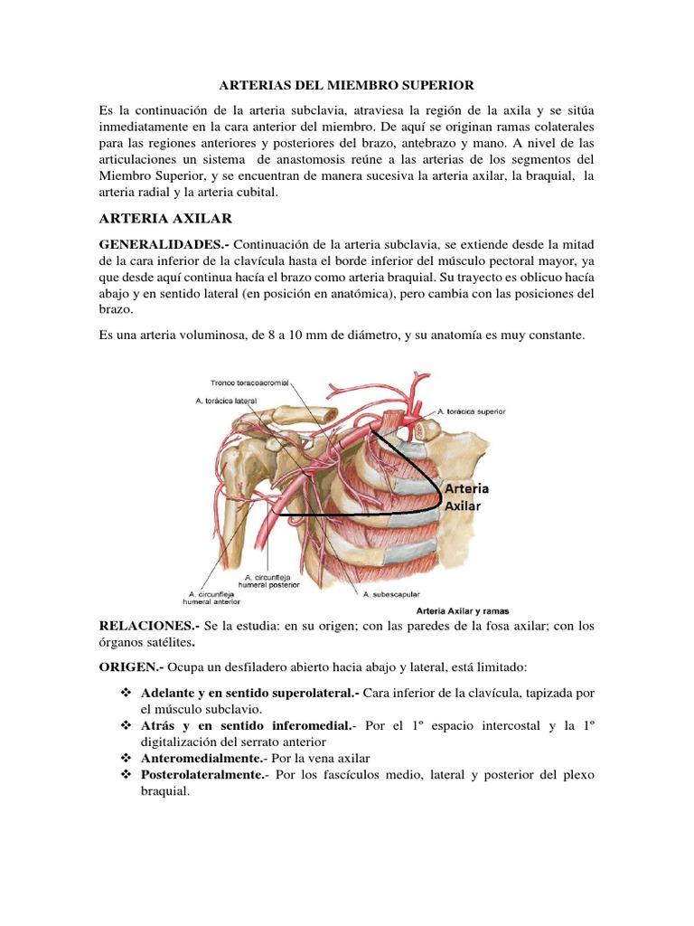 Arterias Del Miembro Superior