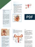 sist reproductor femenino.docx