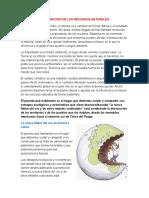 DEPREDACION DE LOS RECURSOS NATURALES.docx