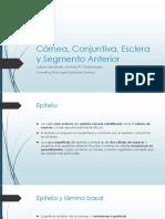 Córnea, Conjuntiva, Esclera y Segmento Anterior