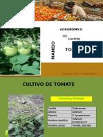 Cultivo de Tomate 06-07 Maylin