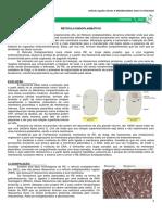 07 - Retículo Endoplasmático