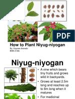 How to Plant Niyug-niyogan.ppt