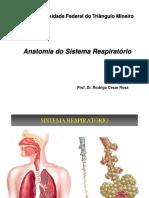 Anatomia do Sistema Respiratório.pptx