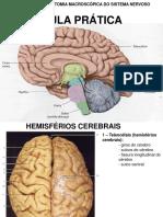 Sistema Nervoso Prática