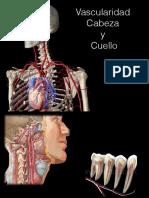 Vascularidad Cabeza y Cuello
