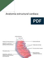 Anatomia Estructural Cardiaca