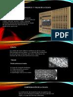 Presentación1.pptxculata
