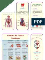 96094820-Triptico-de-Sistema-Circulatorio.docx