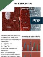 Genes & Blood Type