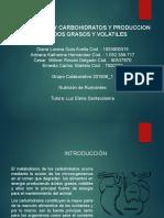 METABOLISMO Y CARBOHIDRATOS Y PRODUCCION DE ACIDOS GRASOS_02.pptx