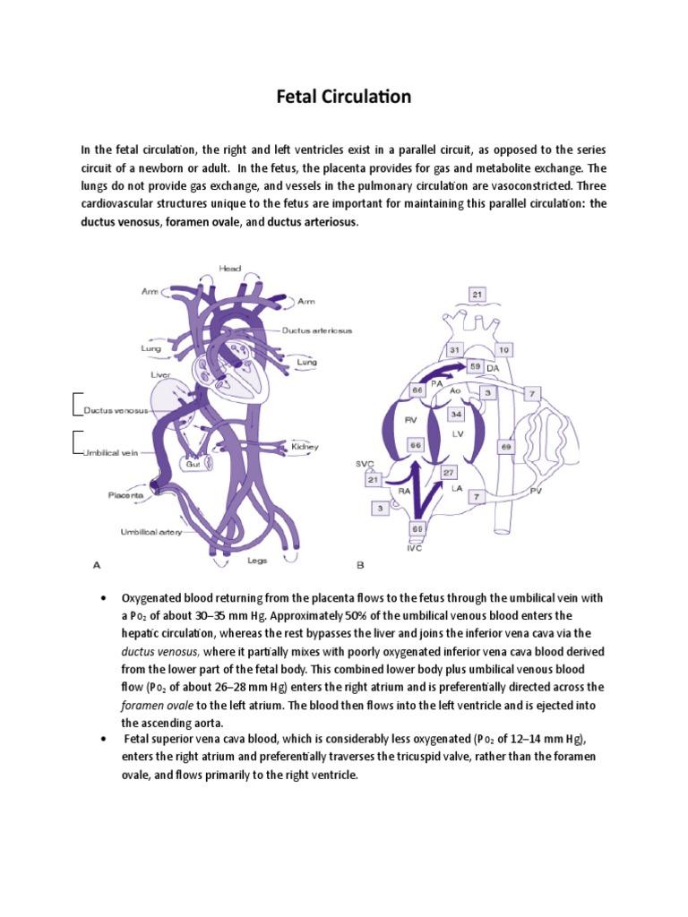 Fetal Circulation   Circulatory System   Fetus