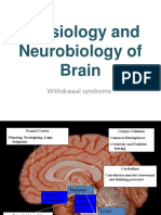 Physiology of Brain.pptx