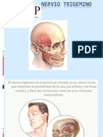 Clases de anatomia TRIGEMINO