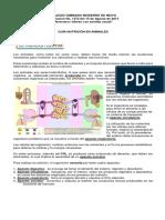 GUIA Y TALLER NUTRICIÓN EN ANIMALES.docx