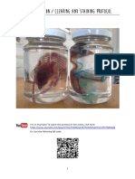 Diaphonization / Clearing and Staining Protocol