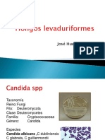 TEORIA levaduriformes