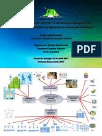 Act17-Mapa Mental de Las Vertientes de Las Estructuras Organizacionales