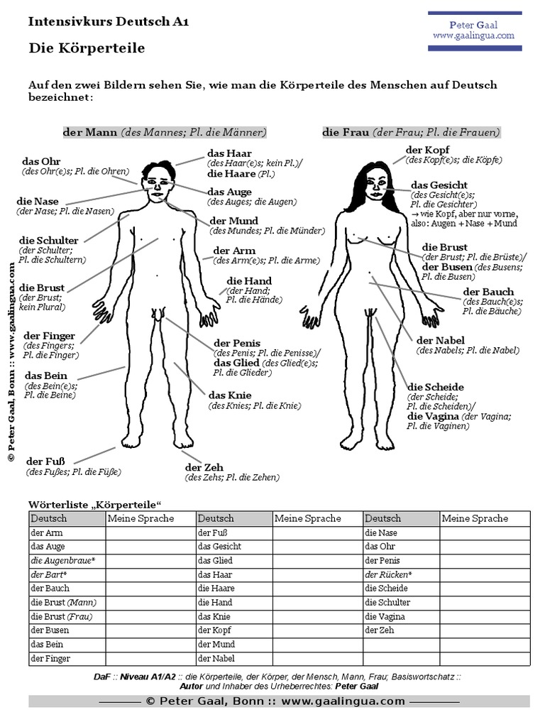 Nett Anatomie Körper Begriffe Galerie - Anatomie Ideen - finotti.info