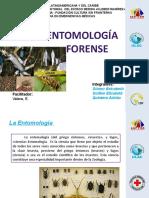 Entomología F