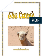 Animals of Africa, The Camel - St Aiden's Homeschool