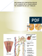 Diapositivas de Analisis Clinico
