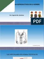 T28- Endocrinología Reproductiva en El Hombre