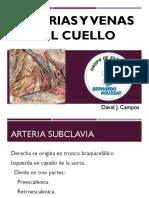 Arterias y Venas Del Cuello - Clase 4