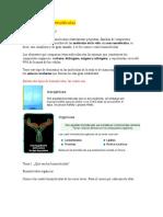 Biomoléculas y Carbohidratos