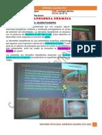 Anatomia Patologica- 22-10-15 - Patologia Dermica