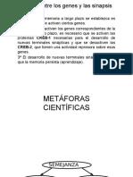 Proc cogn basi 21.pptx
