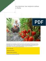 El Secreto Para Dominar Las Mejores Salsas de Tomate de Italia