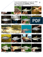 FOTOS DE PECES.pdf