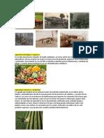 Agricultura Biológica u Orgánica