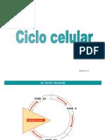 ciclocelularesquema1112-120430111947-phpapp02.pps