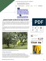 ¿Conoces El Poder Curativo de Las Hojas de Olivos_ - Saludable