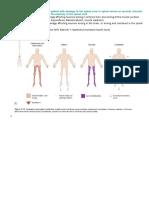 Motor Neuron Lesions.docx