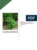 Trabajo de Botanica Sistematica
