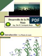 Desarrollo de La Planta de Maíz