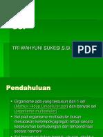 2 Sel-biologi yuni.ppt
