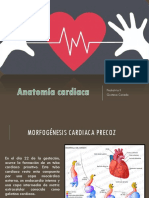 Anatomía-cardiaca