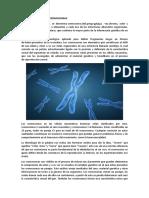 Generalidades de Los Cromosomas