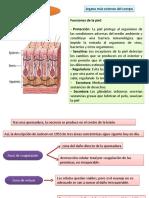 Analisis Deteriroo Cutaneo Uemadurs