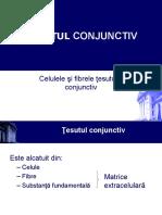 Tesut Conjunctiv Stoma