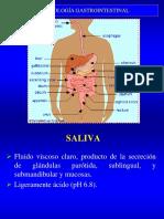 Fisiología sistema digestivo.pdf