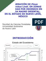 Tesis Ph.D. Presentacion