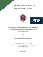 Tesis Ph.D. Pinus