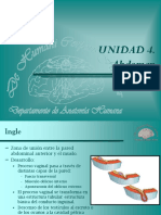 anatomiacanalinguinal