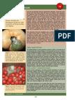 Postharvest Disease of Tomato