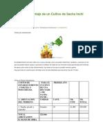 Costos de Montaje de Un Cultivo de Sacha Inchi